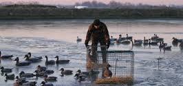 Enquête sur les appelants visant à négocier la chasse en période de grippe aviaire (risque élevé)